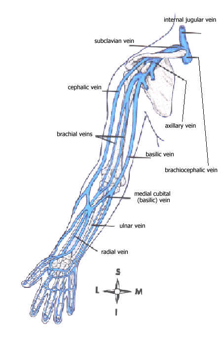Images Of Upper Extremity Veins Rock Cafe
