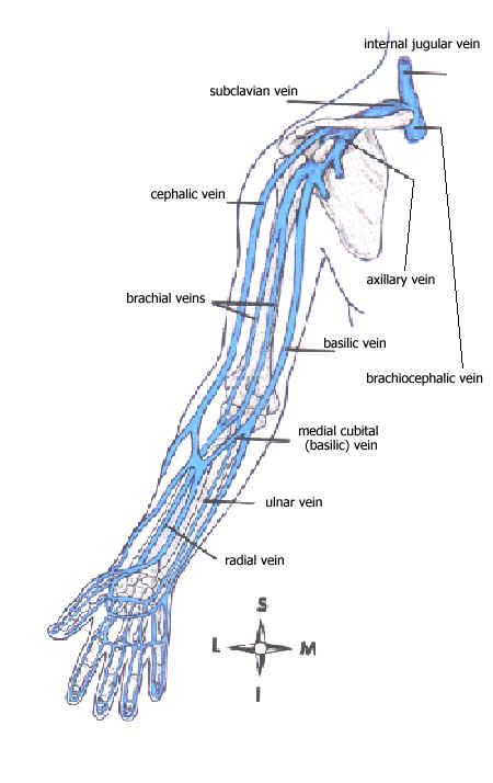 Cephalic arm diagram wiring diagrams