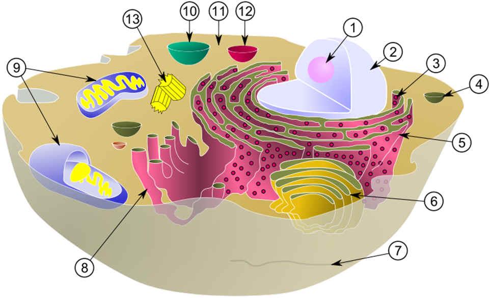 Composite Cell Diagram