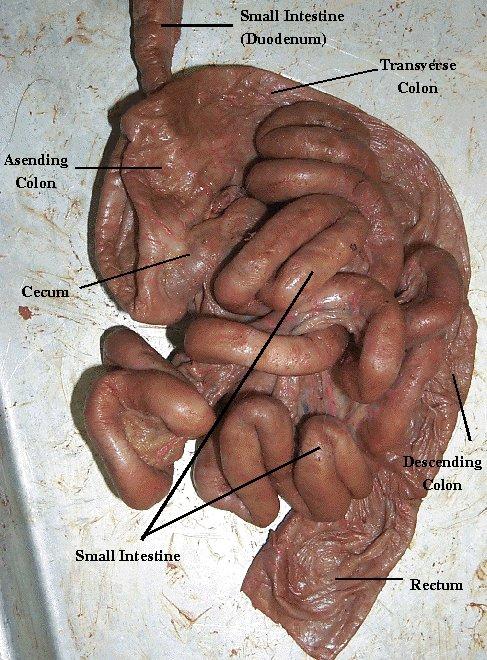gallbladder diet xenadrine