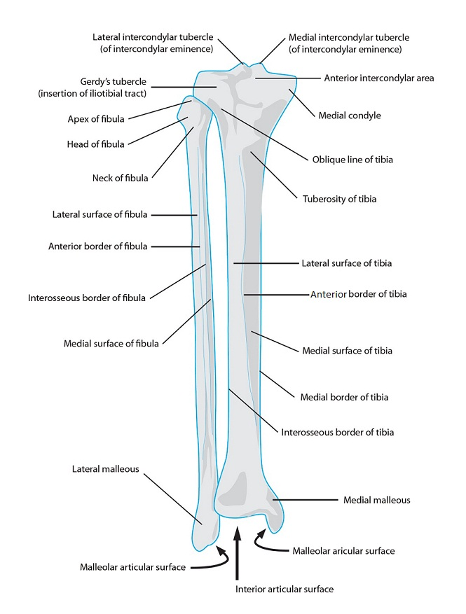 Skeletal System Diagrams