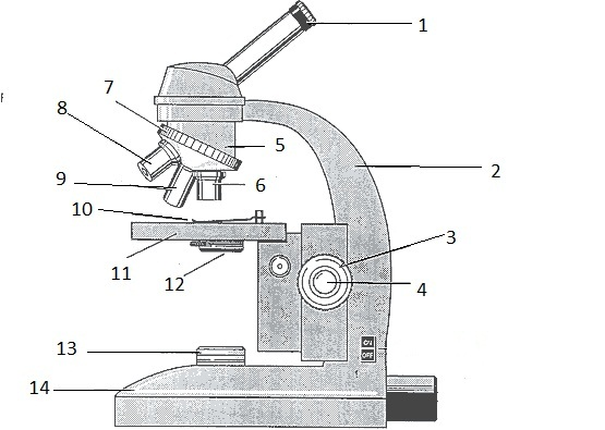 Pictures Microscope Labeling Worksheet - Getadating