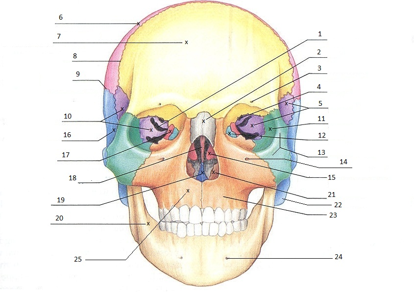 skull quiz, Wiring diagram