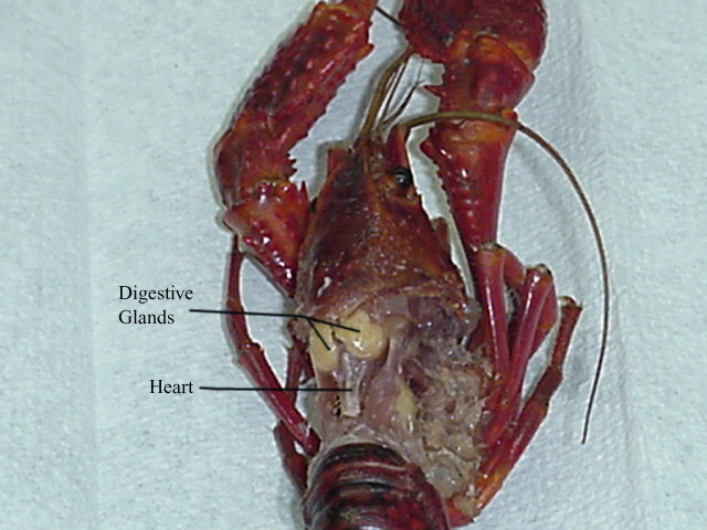 Setup For The Dissection